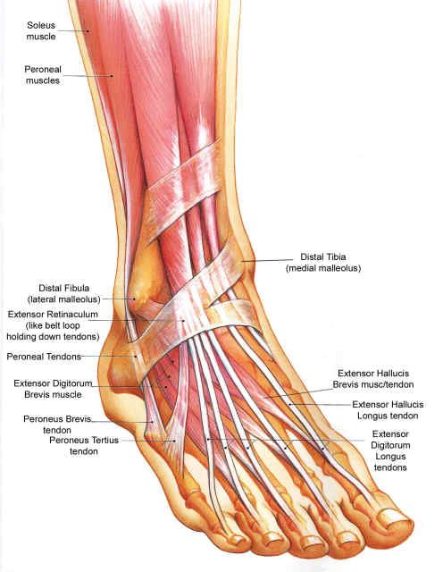 The Ankle | Advanced Injury Treatment Center